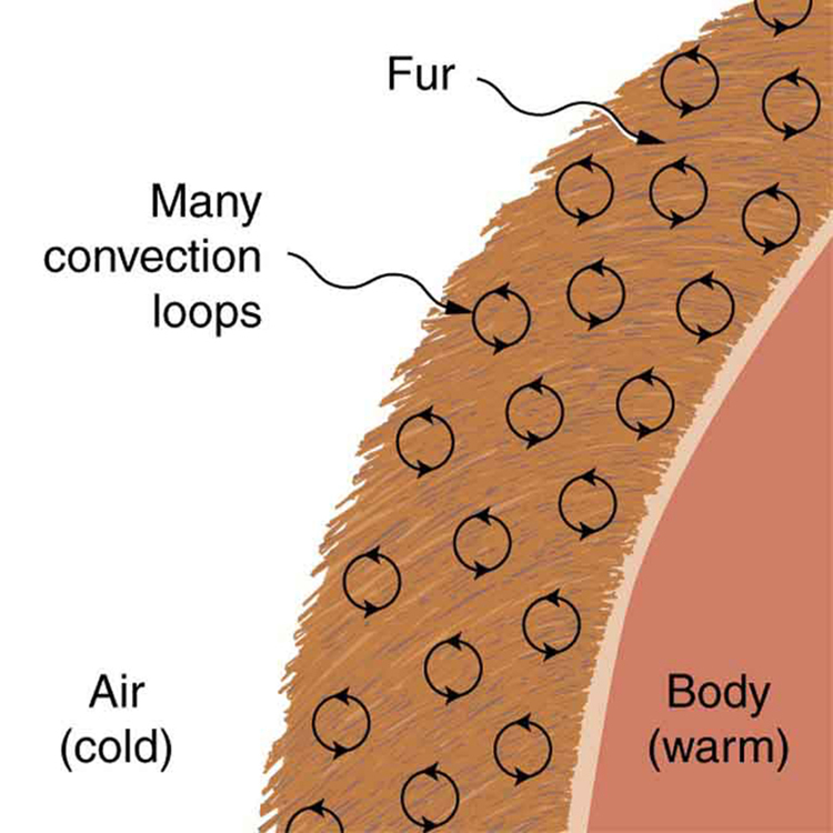 insulation-convection